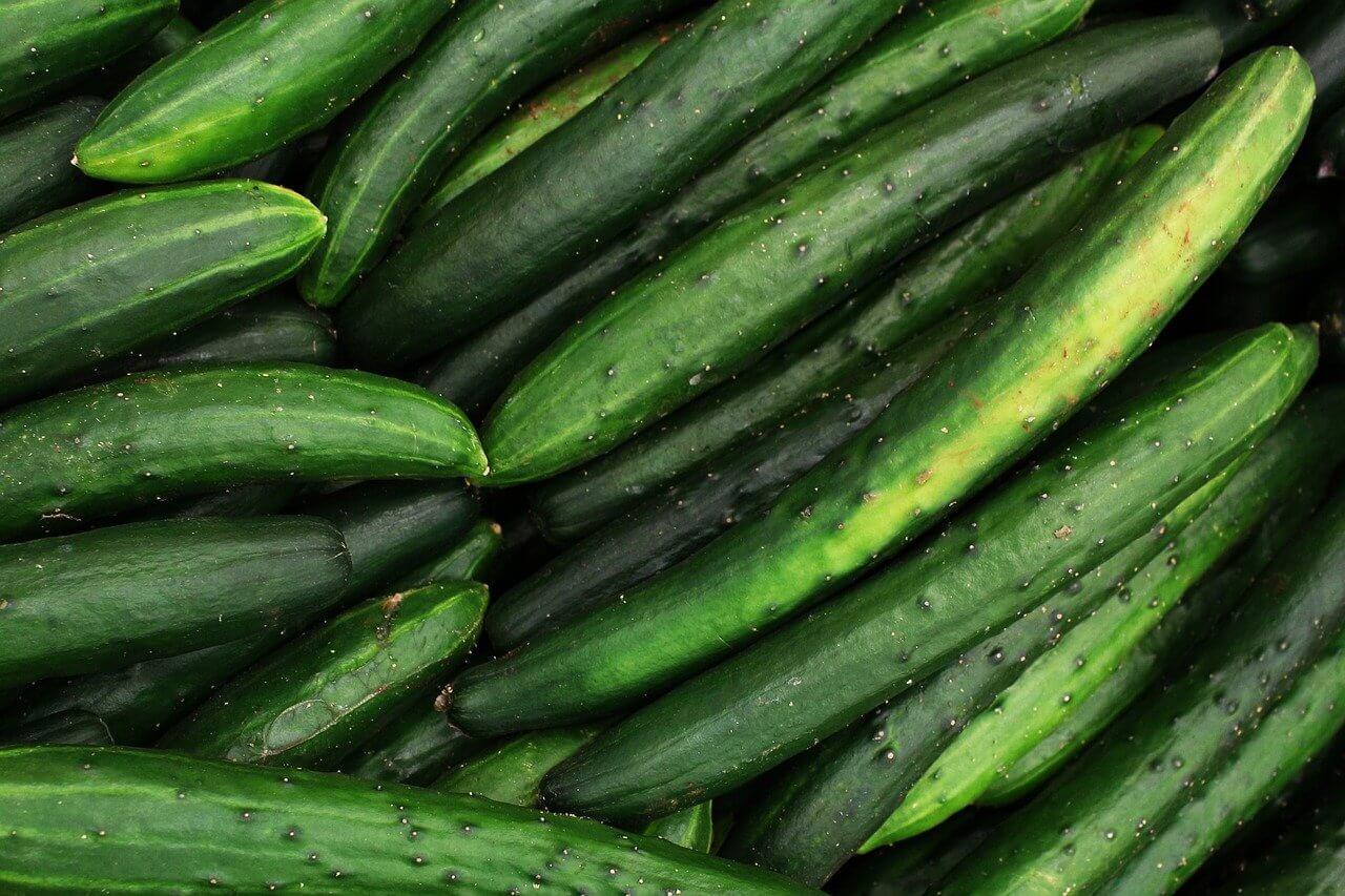 cucumber-5318945_1280-1